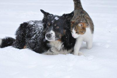 Pet Snow Safety